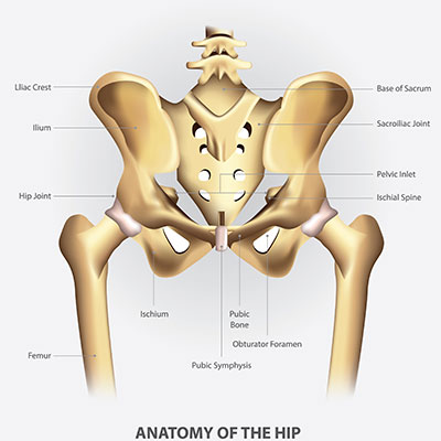Doctor for pain in pelvis - Urology specialist in chennai