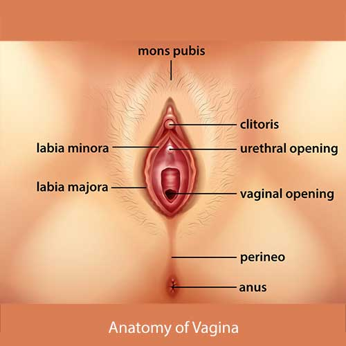 Vulva - Pain on outer surface of vagina, urologist for treatment